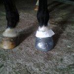 3. den Schuh bis zum Kronrand vervollständigen - fertig