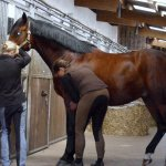 Pferdecheck in Luhme auf dem Reiterhof Lück