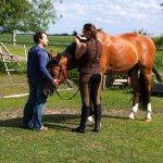 """Kurs bei Stephanie Hornung - TTouch'n Ride: Hier """"Mähne kreiseln""""."""