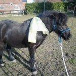 Angstbewältigungstraining mit meinem Pony