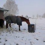 ein Waschkessel erfüllt super den Zweck, das Wasser für die Pferde frostfrei zu halten